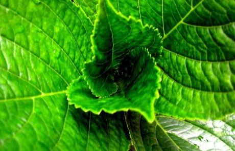 טיפול טבעי בהליקובקטר פילורי